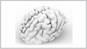 imagen de un cerebro 3D