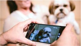 imagen de un celular tomando una fotografía de un perro